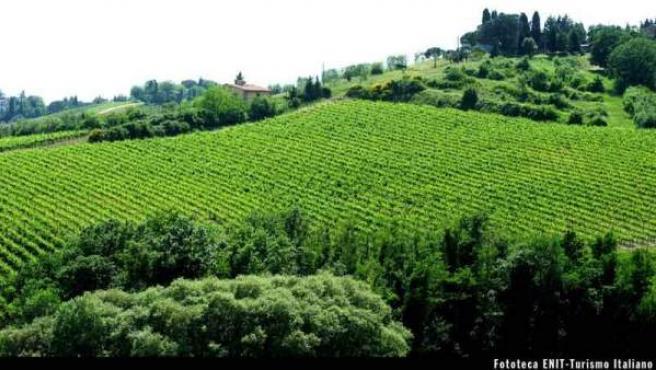 16 de las 19 rutas reconocidas en lazona hacen hincapié en el vino.