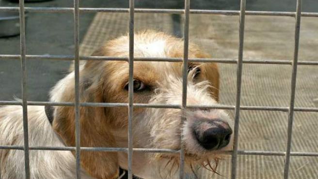 Uno de los perros de un centro de protección animal.