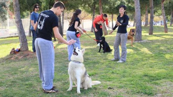 Menores Infractores Con Perros Abandonados