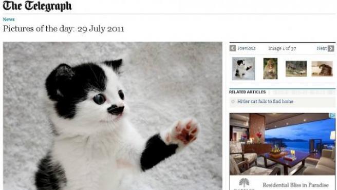 El gatito abandonado por su parecido con Hilter.