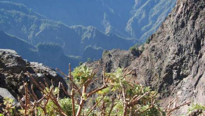 La Cumbre, en La Palma