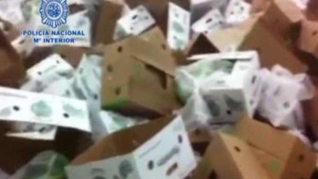 La Policía Interviene 450 Kilos De Coca En Plátanos