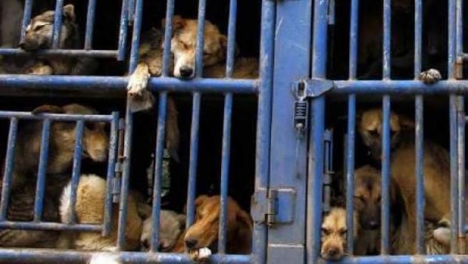 China ha prohibido un festival en el que se torturaba a perros para luego venderlos como comida.