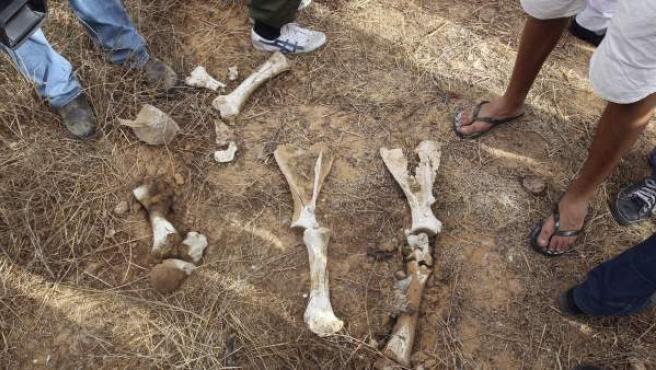 Algunos de los restos encontrados en la fosa común que los rebeldes libios han hallado cerca a la prisión de Abu Salim. Dirigentes del Consejo Nacional de Transición han confirmado que en este lugar hay cadáveres de más de 1.200 personas.