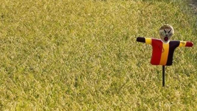 Un espantapájaros en un arrozal en Soma, a 40 kilómetros al norte de la planta de Fukushima golpeada por el tsunami.