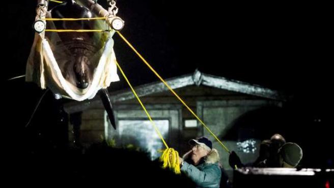 Operarios de un delfinario holandés suben la orca Morgan a un camión para su traslado al zoológico español Loro Parque de Tenerife.