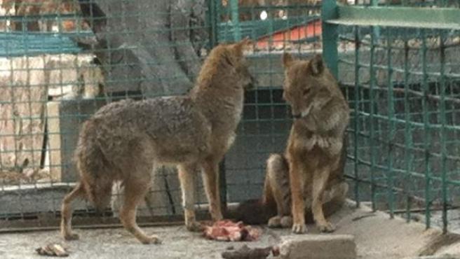 Animales del zoo de Kabul.
