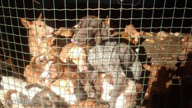 Perros de caza hacinados en un zulo en Tarragona.