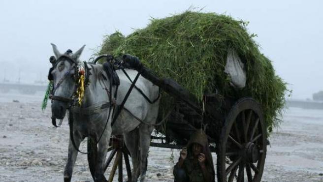 Un niño se resguarda de las lluvias del monzón bajo un carro de caballos en las riberas del río Tawi en India.