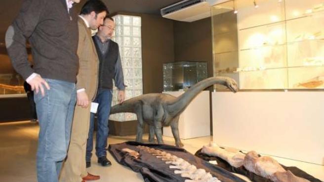 'Spinophorosaurus Nigerensis'