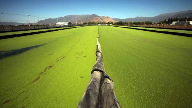 Vista general de un estanque donde se cultivan algas para una futura producción de proteínas y combustible.