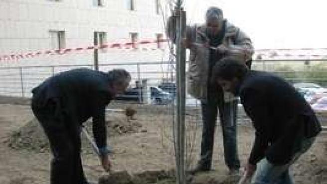Plantación Arboles