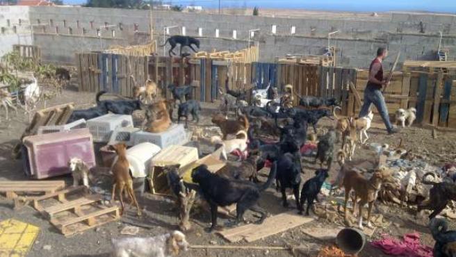 Imagen De Los Perros En La Perrera Municipal