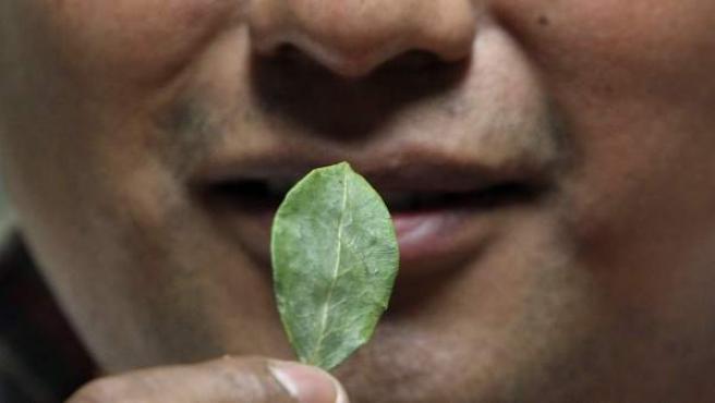 Un hombre boliviano mastica una hoja de coca.