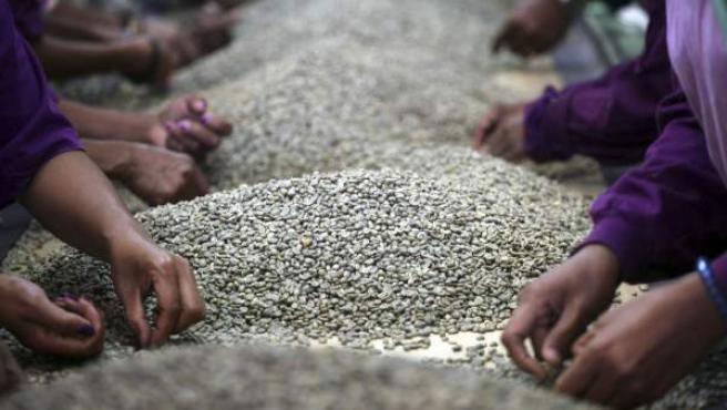 Empleados de una fábrica de café limpian granos en Ermera, República Democrática de Timor Oriental, al sudeste de Asia.