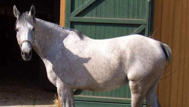 Imagen de archivo de un caballo.