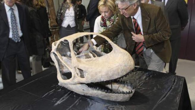 La Fundación Conjunto Paleontológico de Teruel Dinopolis ha presentado los restos fósiles de la pieza más relevante y esperada del dinosaurio turolense conocido como Gigante Europeo: su cráneo. El hallazgo de los huesos de la cabeza ha permitido completar el esqueleto de este gran saurio.