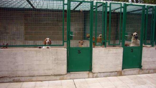 Centro De Atención A Animales De Pamplona.