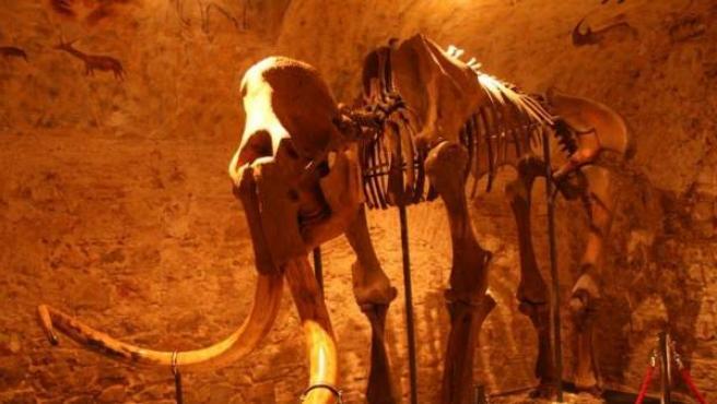 Imagen de archivo de un esqueleto de mamut del Museo del Mamut, en Barcelona.
