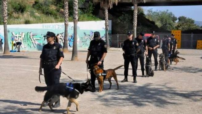 Unidad Canina De Palma