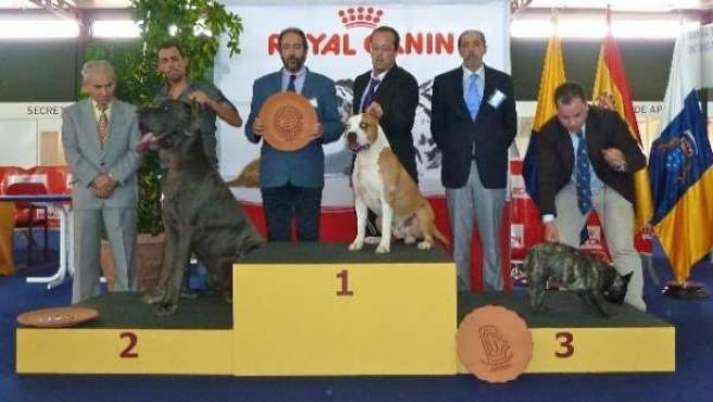 Exposición Internacional Canina De Las Palmas