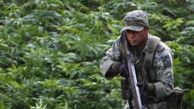 Un miembro del ejército mexicano hace guardia en una plantación ilegal de marihuana tras una operación militar en las montañas de Culiacán (México).