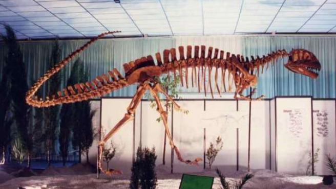 Esqueleto De Dinosaurio Exposición Dinopétrea En Málaga