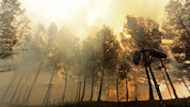 El fuego ha afectado una zona de pinos en la localidad de Carlet en la Comunitat Valenicana, donde los incendios forestales de Cortes de Pallás y de Andilla han arrasado miles de hectáreas pese a los trabajos por tierra y aire para frenar las llamas y han obligado a desalojar a más de un millar de personas.