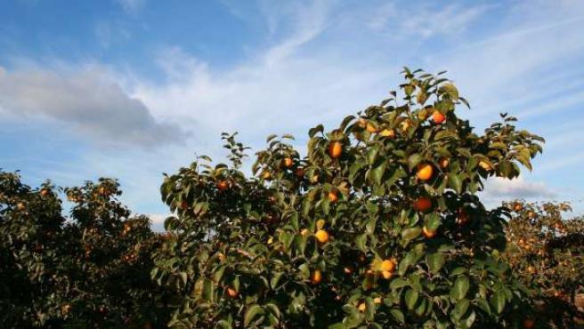 Cultivos en Carlet