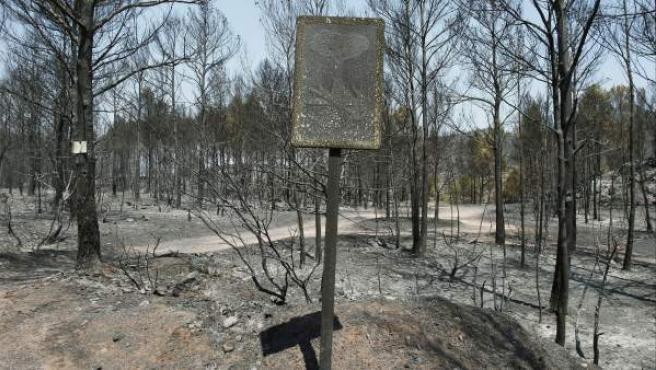 Estado en que ha quedado el bosque cerca del pueblo de Agullana debido al incendio que ha quemado casi 14.000 hectáreas en Girona y que ya se ha dado por estabilizado.