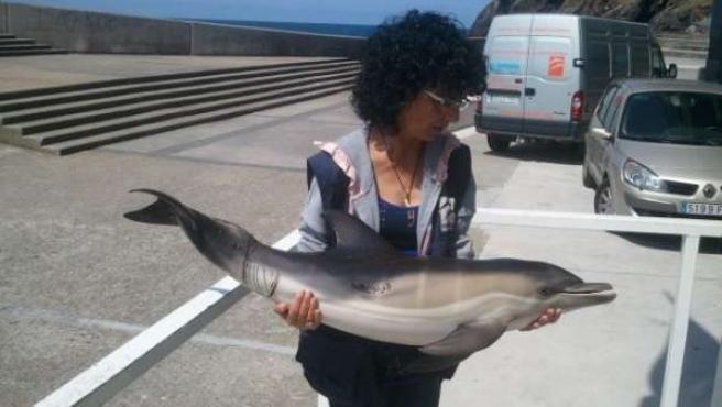 Cría De Delfín Herido En Rodiles