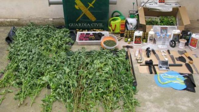 Plantas de marihuana y material intervenido por la Guardia Civil.