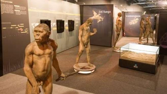 Exposición Sobre Evolución Humana De La Caixa