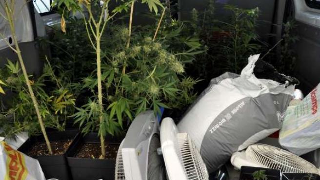 Mariguana y útiles para su cultivo intervenidos en la operación