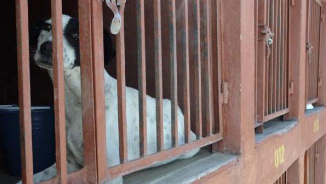 Imagen de uno de los perros que vivían en la reserva ecológica del Cerro de la Estrella, en Ciudad de México, que fueron capturados por agentes policiales de la capital.
