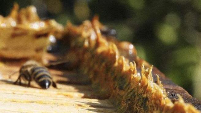 extracto de propoleo de abeja gotas