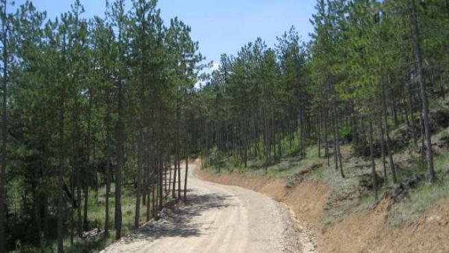 Las vías verdes