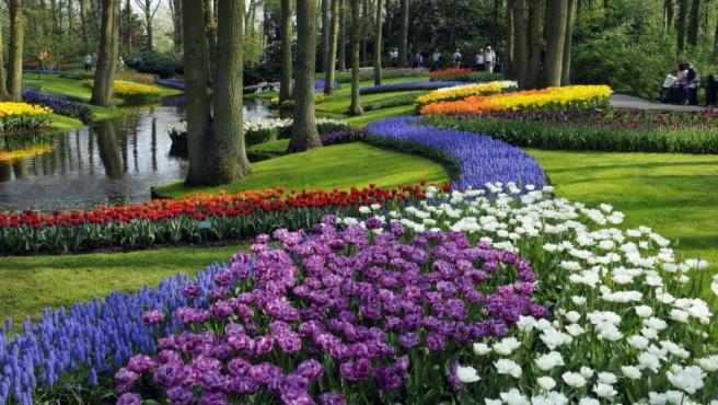 Fotografía cortesía del Keukenhof, el mayor jardín floral de Holanda, que abrió sus puertas con expectativas de mantener su afluencia de visitantes anuales, convirtiéndose en un evento que con el colorido de sus flores sobrevive a los efectos de la crisis económica internacional.
