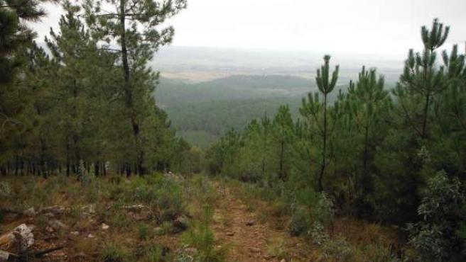 Federación Extremeña de Montaña y Escalada, pinar