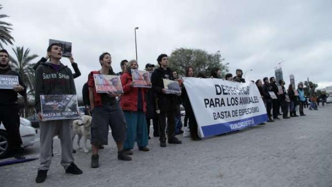 Protesta antitaurina frente a la Maestranza