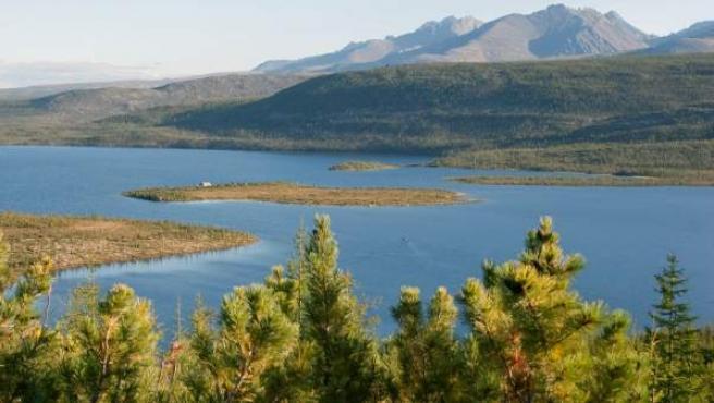 Bosques de pino en un lago en Kolymá (Rusia), cerca de la región boreal.