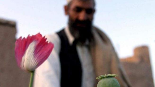 Un granjero afgano revisa una planta de amapola en su campo al este de Kabul.