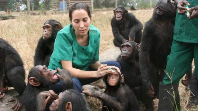 Rebeca Atencia cuidando de los chimpancés en la República del Congo. El Instituto Jane Goodall no interfiere en la vida de los chimpancés salvajes, los que aparecen en la foto habitan en el centro de rehabilitación de Tchimpounga.