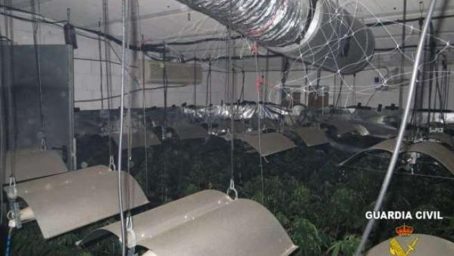Laboratorio ilegal de marihuana localizado en Ontinyent