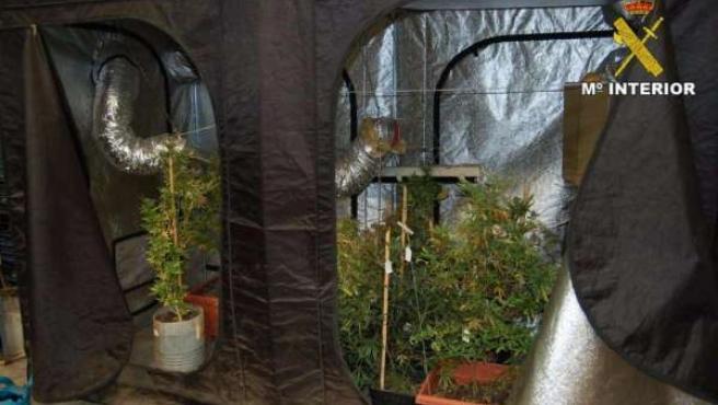 Laboratorio de marihuana localizado en Museros