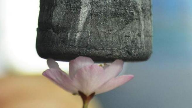 Una pieza de gel de grafeno sobre una flor en un laboratorio de la Universidad de Zhejiang en la localidad de Hangzhou, en el este de China. Este material, de aspecto parecido al de una esponja, pesa únicamente 0,16 miligramos por centímetro cúbico, lo que le convierte en el material sólido más ligero del mundo.