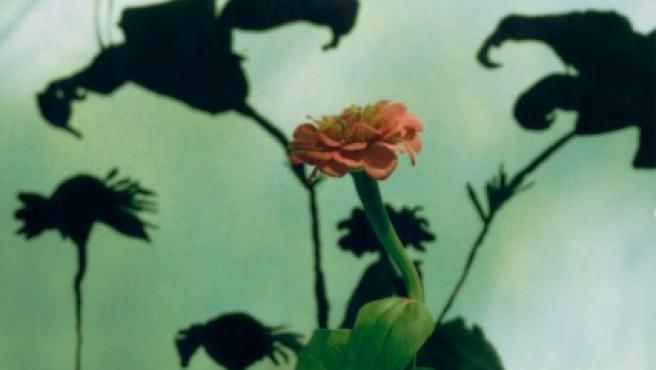 Polaroid de Miranda Lichtenstein