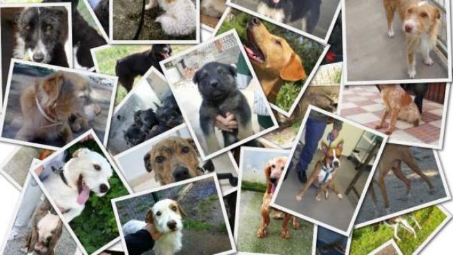 Perros sin raza a la espera de un hogar en protectoras de toda España.
