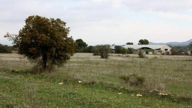 Los terrenos de siete hectáreas de Rasquera que debía acoger la plantación de marihuana.