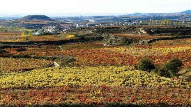 Viñedos en la localidad riojana de Briñas en pleno otoño.